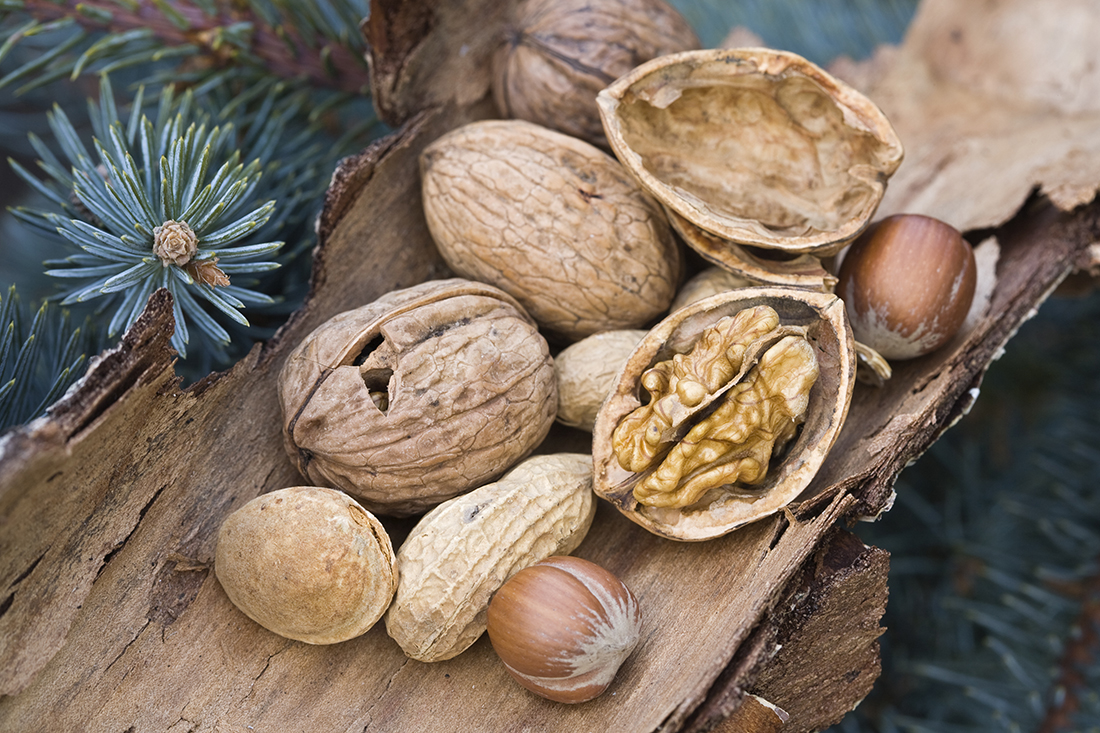 Various nuts lying on a dry bark